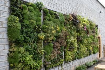 túi vải trồng cây vườn tường