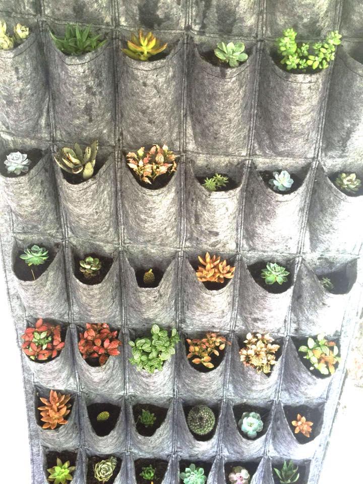 Trồng cây trong túi vải