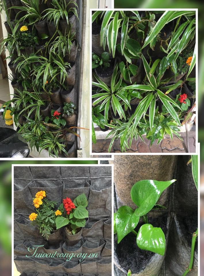 Túi vải trồng cây HTV