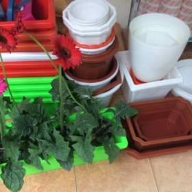 Bán chậu nhựa tại Hà Nội