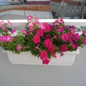 Chậu nhựa trồng hoa thông minh