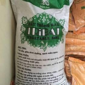 Đất Tribat trồng cây mầm
