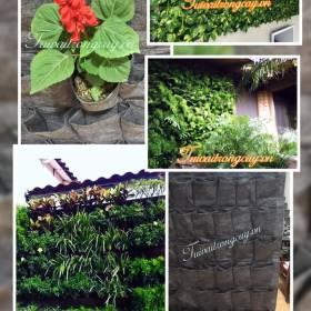 Túi vải trồng cây treo tường