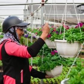 Cấp nhanh các loại hoa tại Green Space