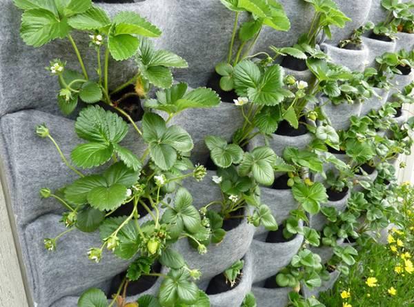 Vườn rau sạch trong nhà vườn thẳng đứng