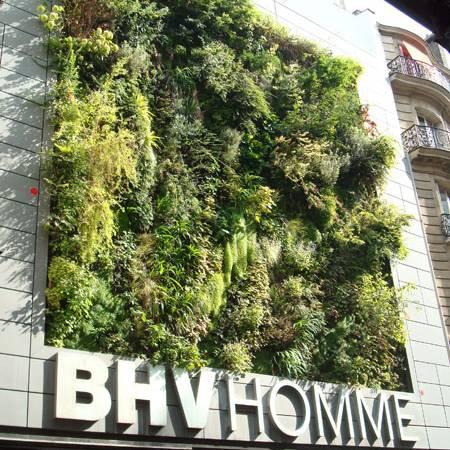 Chăm sóc vườn tường bằng hệ thống phun nước