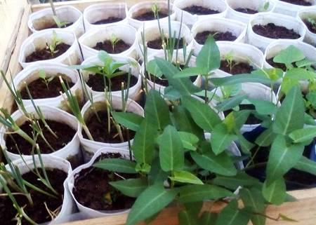 Phương pháp trồng rau hiệu quả bằng túi vải