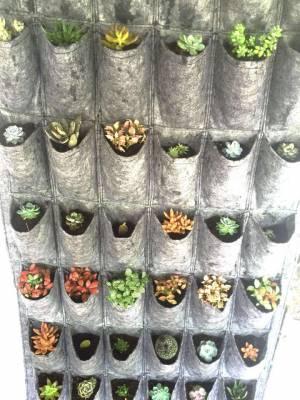 Giới thiệu túi vải trồng cây