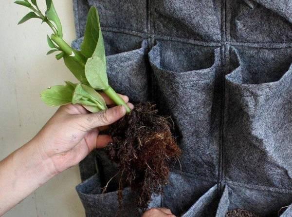 Túi vải trồng cây là gì