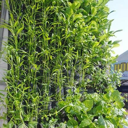 Cách trồng rau sạch cây cảnh với không gian hẹp