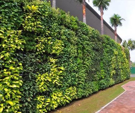 Vườn tường đứng ngoài trời
