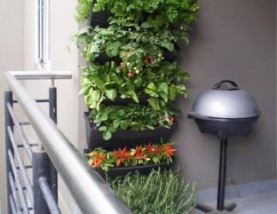 Trồng cây trên ban công với túi vải trồng cây