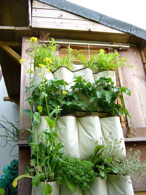 Bí quyết trồng cây túi vải treo tường