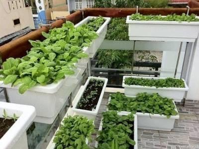 Trồng cây trong hộp chậu nhựa sử dung đất dinh dưỡng