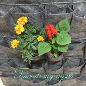 Túi vải trồng cây trên tường