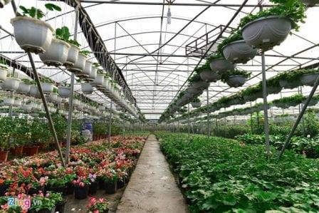 Các loại cây cảnh tại trại hoa Hà Nội Green Space