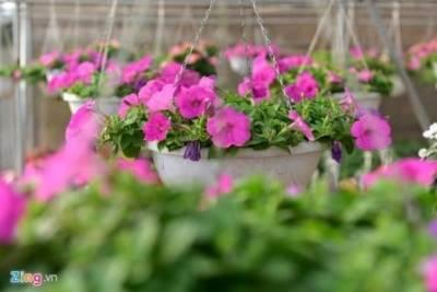 Gio hoa tai nha vuon Green Space