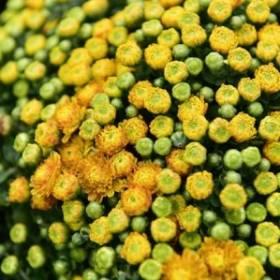 Hoa dep ngay xuan tai Ha Noi Green Space