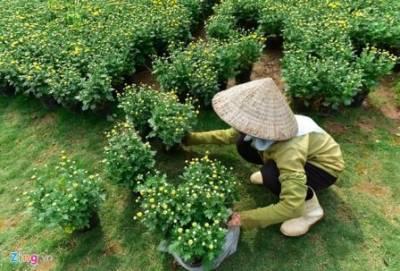 Hoa va cay canh tai Green Space