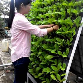 Giá kệ trồng cây