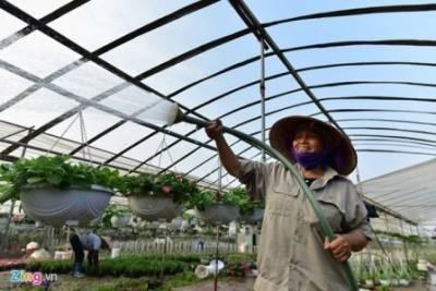 Nhà vườn Green Space cung cấp số lượng lớn hoa cây cảnh