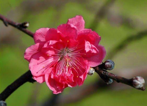 Trong hoa dao bang chau canh nhua