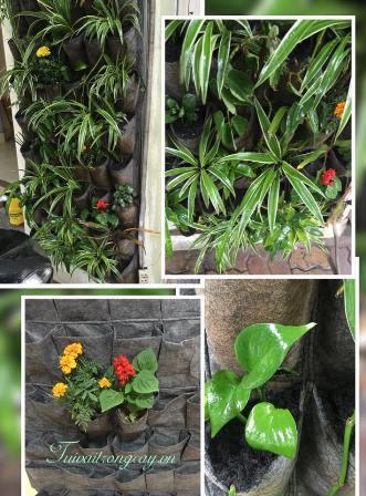 Bán túi trồng cây treo tường
