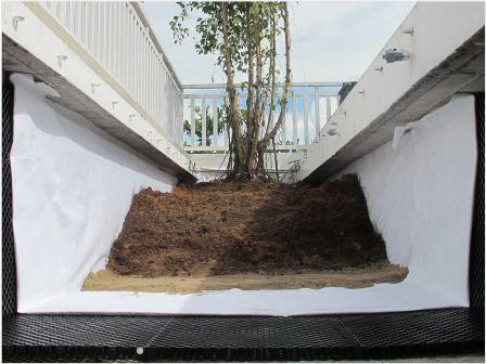 Cách trồng cây trên mái