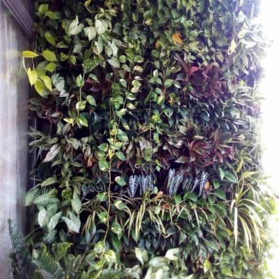 Thi công túi vải trồng cây vườn tường