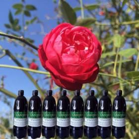 Dung dịch dinh dưỡng cho hoa hồng